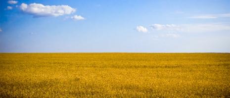 Whet Field in Ukraine