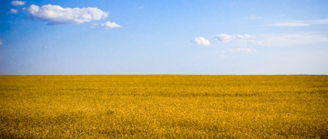 Whet Field in Ukraine